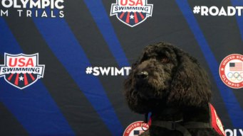 US Swimmers Using Therapy Dogs to Relax Before Races