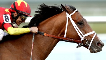 Audible Wins Florida Derby, Cementing Kentucky Derby Spot