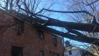 High Winds Down Trees, Power Lines; Blow Off Part of Roof