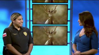 Steer Clear of Deer in High Risk Areas Including Md., Va.
