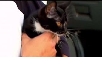 Kitten Found Inside Car's Dashboard