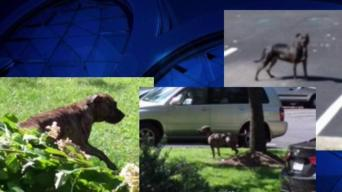 Springfield Residents Worried About Roaming Dogs