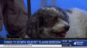 How to Help Your Pet Avoid Boredom