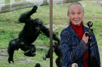 The Jane Goodall Interview
