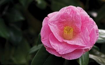 Historic Garden Week Blooms in Virginia