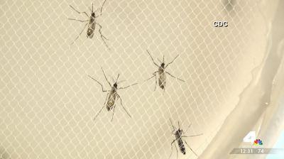 Md. Gov. Authorizes $250K for Zika Prevention Efforts