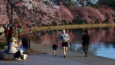 Record Numbers at Cherry Blossom Fest
