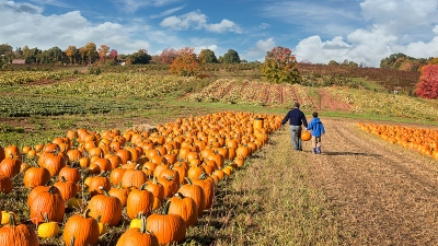 6 Awesome D.C.-Area Pumpkin Patches