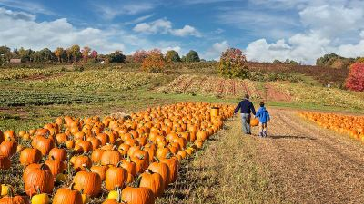 Bring the Kids: Kid-Friendly Fall Festivals in the DC Area