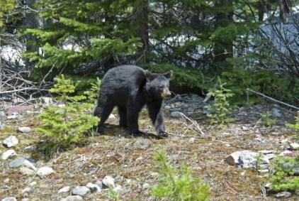Bear Sightings at Two Schools in Virginia Town