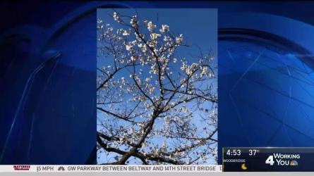 <p>Storm Team4 has your forecast for March 23, 2018.</p>