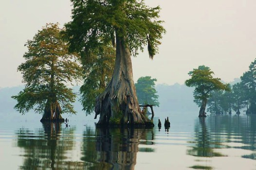 The Great Dismal Swamp: Not So Dismal After All