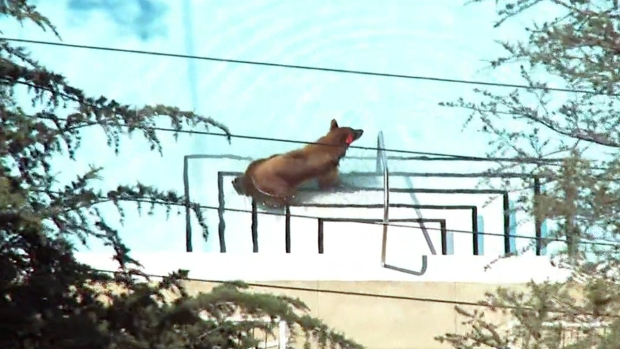 [PHOTOS UPDATED 6/8] Bear Sightings in Southern California