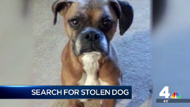 [DC] 10-Year-Old Dog Taken During Burglary