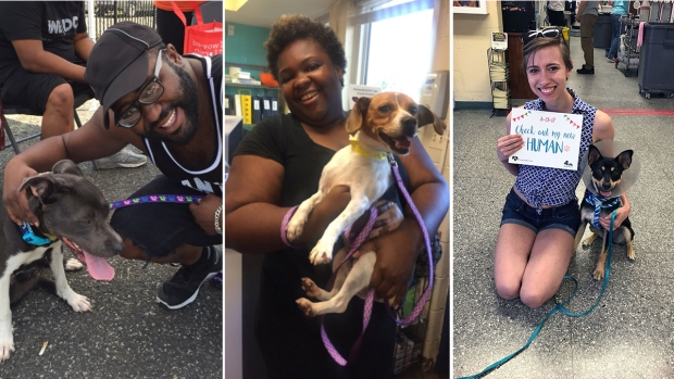 Scenes From #CleartheShelters Day 2017