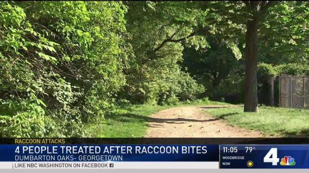 [DC] 4 Treated After Raccoon Attacks in Georgetown