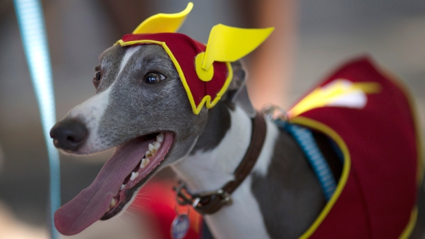 [NATL] Brazil's Carnival Parade Is For the Dogs