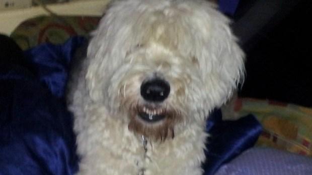 [DFW] Dallas Man's Car Stolen With Dog Inside