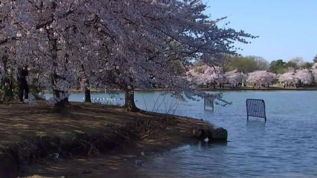 Campaign Hopes to 'Save' DC's Tidal Basin From Flooding