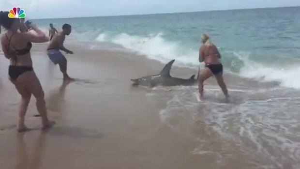[NATL] Fisherman Reels in Hammerhead Shark
