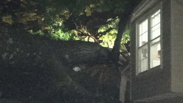 Tree Falls on House, Killing Woman in Fairfax County