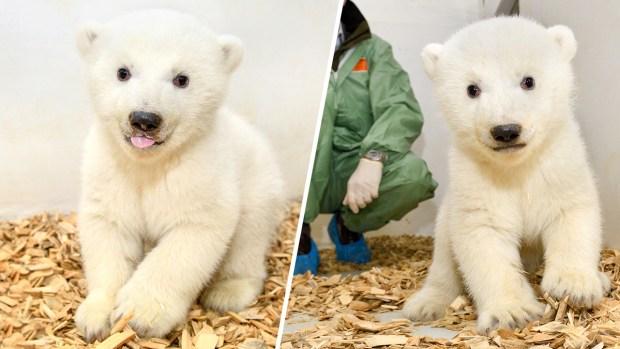 Adorable Zoo Babies: Baby Polar Bear at Berlin Zoo