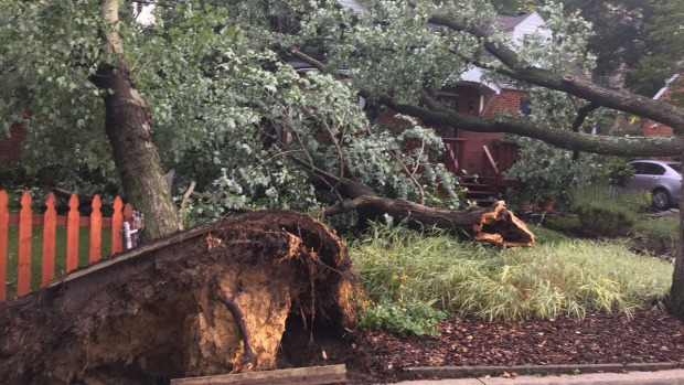 Photos: Severe Weather Damages College Park Neighborhood