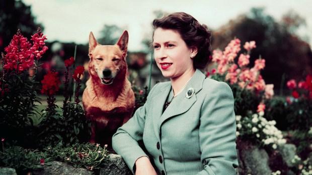 [NATL] Queen Elizabeth's Royal Corgi Dynasty in Photos