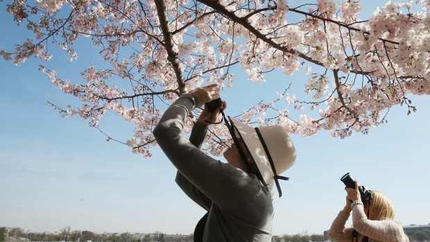 Cherry Blossom Festival 2018: Your Essential Guide to Blooms, Parades and More