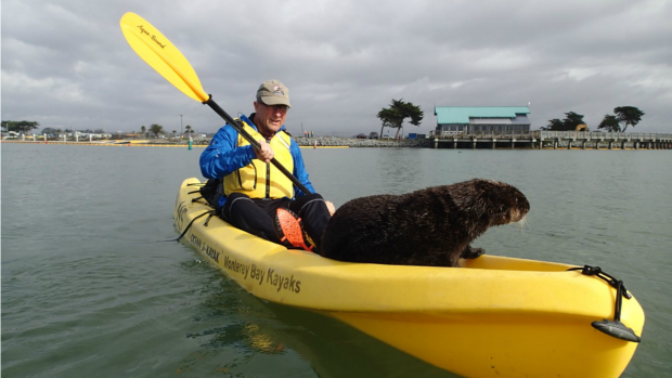 Unbelievable Animals: Otter Hops Onto Kayak