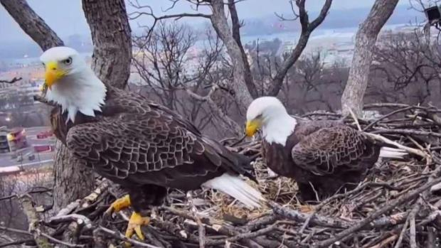[DC] Seeking Justice: DC Eagle Missing From Nest