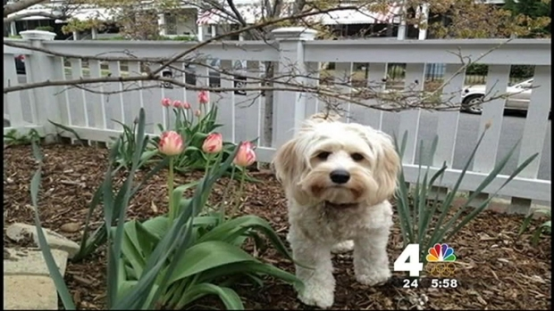 [DC] Find Margo: Man Desperate to Find His Missing Dog