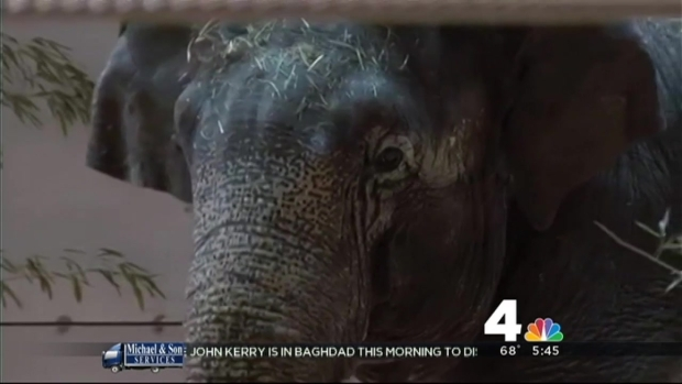 [DC] New Elephants to Debut at National Zoo