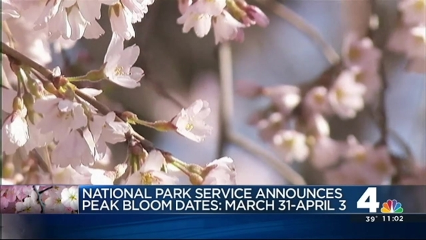 [DC] NPS Reveals Cherry Blossoms' Peak Bloom Dates