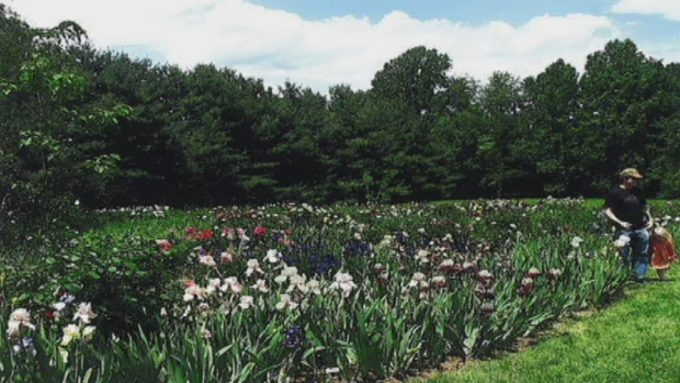 Looking Back: Margaret Thomas' Iris Garden