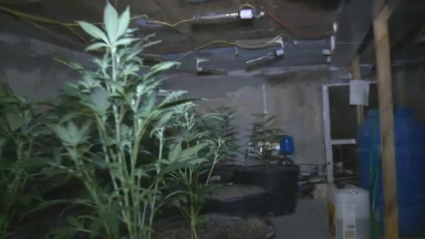 [MI] Inside Underground Marijuana Lab in Miami-Dade