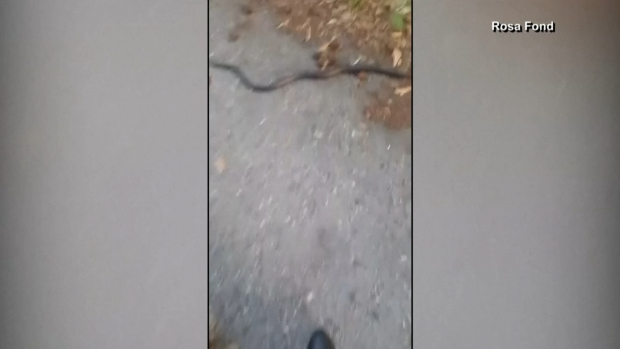 [NATL-MI] Florida Woman Rescues Snake Stuck in Beer Can