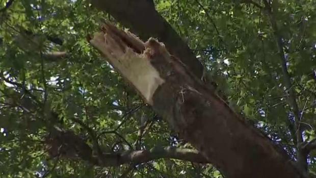 [DC] Woman Killed After Tree Limb Falls on Her