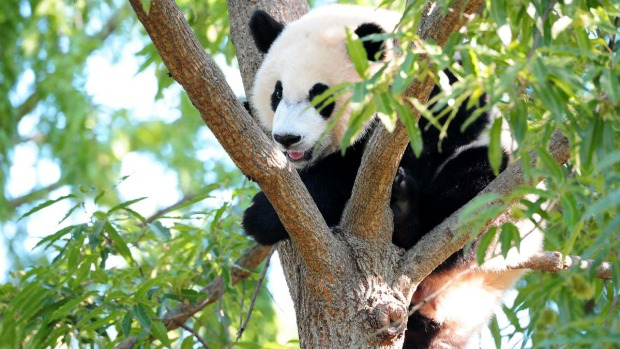 PHOTOS: Bei Bei: Now and Then