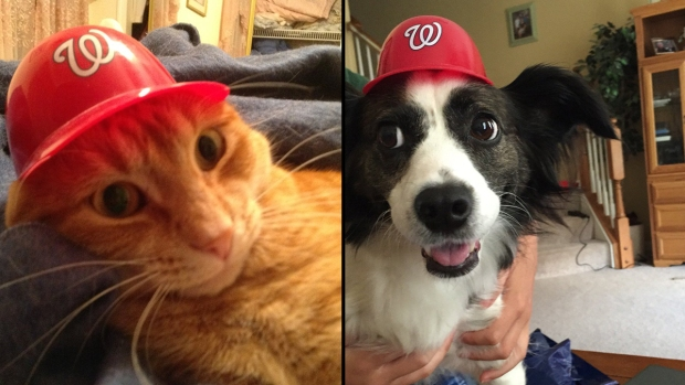 #OnePursuit: Nats Fans (and Pets!) Show Their Pride