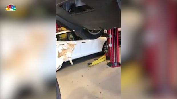 [NATL] Furry Surprise Found Behind Tesla Bumper