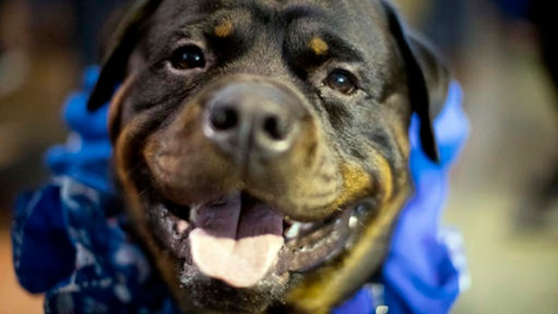[NATL-NY] Meet the Dogs -- and Cats -- of the Westminster Dog Show