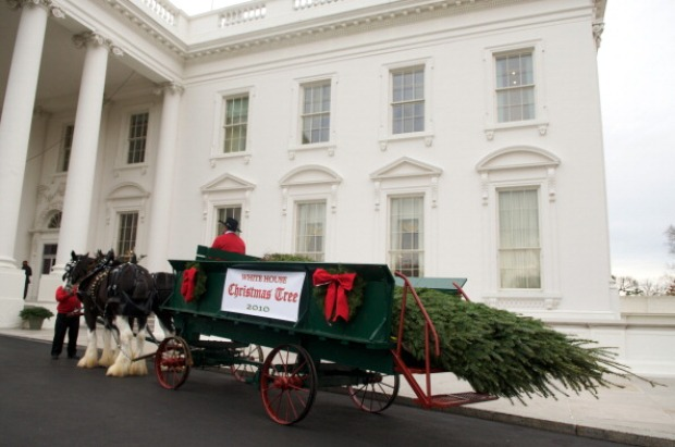 Christmas Tree Delivered to White House