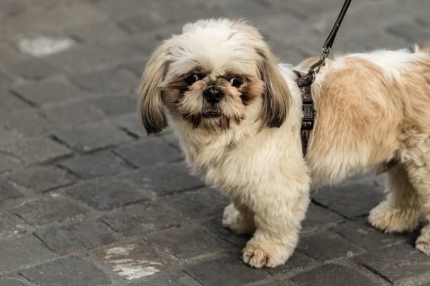 [NATL] America's 10 Favorite Dog Breeds