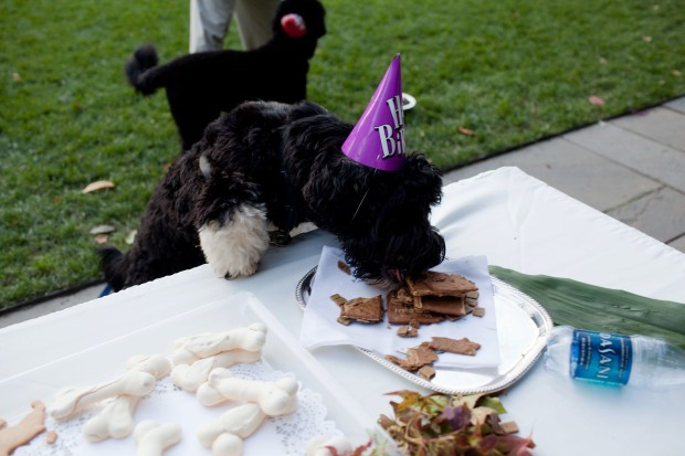 Bo Obama Turns Two