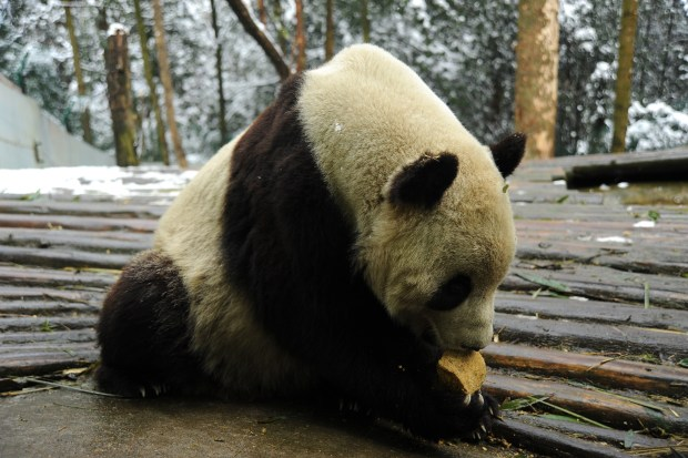 Tai Shan in His Chinese Surroundings