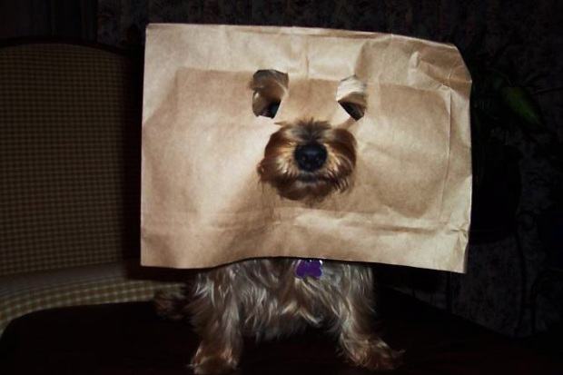 Your Pet Costume Pics
