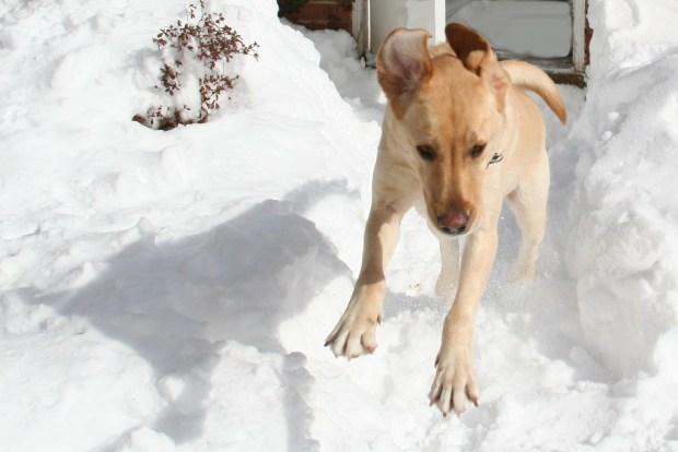 iSee: We Got Snow Pix, Part 5
