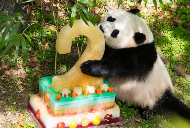 Big Sister Bao Bao Turns 2, Gets Giant Fruitsicle