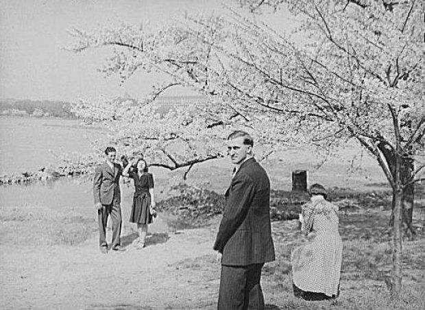 Cherry Blossom Scrapbook: 1941 Edition